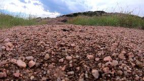 Grandi formiche che strisciano intorno al foro in terra stock footage
