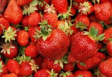 Grandi fragole rosse e saporite Fotografia Stock Libera da Diritti
