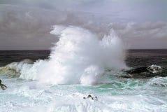 Grandi frangiflutti sopra le rocce vulcaniche dell'isola del Nord del Madera nell'Oceano Atlantico Immagini Stock Libere da Diritti