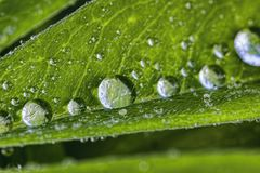 Grandi gocce di una pioggia Immagine Stock Libera da Diritti