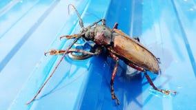 Grandi insetti con il guscio duro Immagini Stock Libere da Diritti