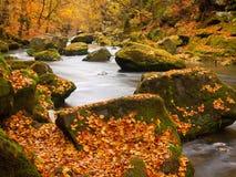 Grandi massi con le foglie cadute Sponde del fiume della montagna di autunno Ghiaia e massi muscosi verdi freschi sulle banche co immagine stock