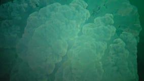 Grandi meduse nel Mar Nero, pulmo di Rhizostoma, galleggiante nella colonna di acqua video d archivio