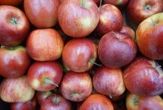 Grandi mele rosse molto immagine stock libera da diritti