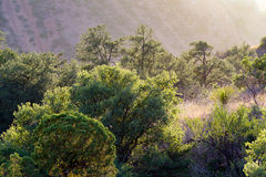 Grandi montagne di Chisos del parco nazionale della curvatura Fotografia Stock