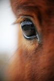 Grandi occhi con i cigli fotografia stock libera da diritti