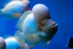 Grande pesce Immagine Stock