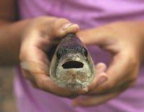 Grandi pesci in mani del `una s del bambino Immagini Stock Libere da Diritti