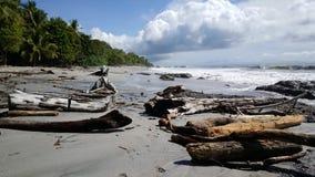Grandi pezzi di legno alla spiaggia Fotografia Stock