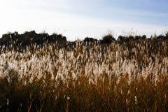Grandi piante selvatiche nel deserto Fotografia Stock