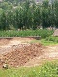 Grandi pietre degli alberi nel kpk Fotografia Stock Libera da Diritti