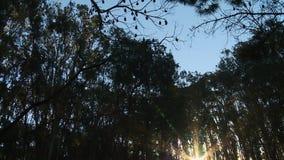 Grandi pipistrelli che appendono sopra l'area boscosa archivi video
