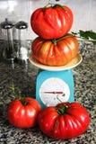 Grandi pomodori extra su una scala Fotografie Stock Libere da Diritti