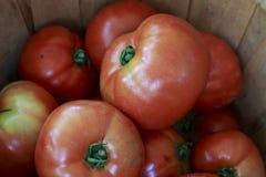 Grandi pomodori maturi rossi in un canestro Immagine Stock Libera da Diritti