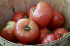 Grandi pomodori maturi rossi in un canestro Fotografie Stock Libere da Diritti