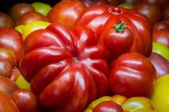 Grandi pomodori naturali organici, forme differenti Immagini Stock