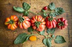 Grandi pomodori rossi e gialli domestici con le foglie su fondo di legno, fine su, vista superiore immagine stock libera da diritti