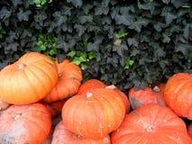 Grandi pumkins arancioni Fotografia Stock