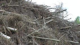 Grandi rami di albero della pila in foresta archivi video