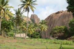 Grandi rocce ed alberi Fotografia Stock