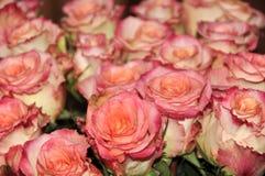 Grandi rose di rosa del mazzo Fotografie Stock Libere da Diritti