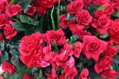 Grandi rose rosse Immagini Stock