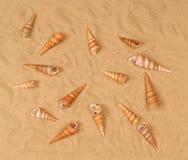 Grandi seashells sulla sabbia fotografia stock