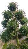 Grandi semi rari della pianta Fotografia Stock Libera da Diritti