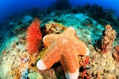 Grandi stelle marine su una scogliera fotografie stock