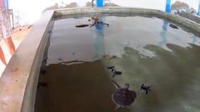 Grandi tartarughe su un'azienda agricola video d archivio