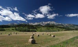 Grandi tondi in un campo del Montana Fotografia Stock Libera da Diritti