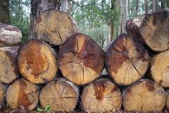 Grandi tronchi di albero di legno in mucchio immagine stock libera da diritti