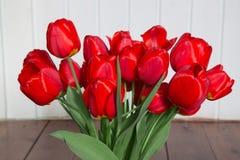 Grandi tulipani rossi del giardino Immagine Stock Libera da Diritti