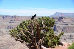 Grandi viste dalle terre del Nevada Immagini Stock Libere da Diritti