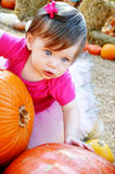 Grandi zucca e bambino Fotografia Stock Libera da Diritti