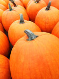 Grandi zucche arancio al mercato Immagine Stock