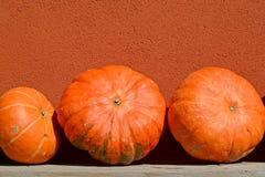 Grandi zucche arancio contro lo sfondo di una parete Immagine Stock Libera da Diritti