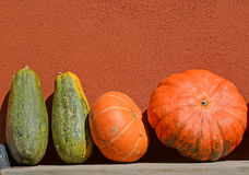 Grandi zucche arancio e verdi contro lo sfondo di una parete Fotografia Stock Libera da Diritti