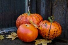 Grandi zucche arancio luminose su vecchio fondo di legno scuro Immagini Stock