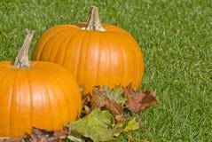 Grandi zucche e fogli di autunno Fotografia Stock