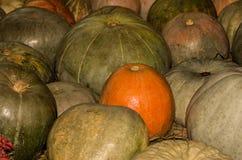 Grandi zucche verdi nel centro dell'arancia, raccolto di autunno Fotografie Stock Libere da Diritti