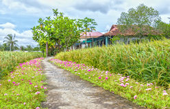 Grandiflora Portulaca royalty-vrije stock fotografie