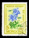 Grandiflorum Delphinium, serie цветков, около 1960 Стоковое Изображение RF
