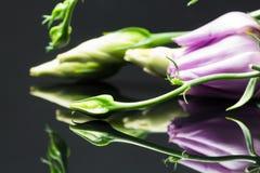 Grandiflorum do Eustoma de Lisianthus - flores e botões bonitos Imagens de Stock Royalty Free