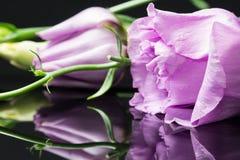 Grandiflorum do Eustoma de Lisianthus - flores e botões bonitos com reflexões Foto de Stock