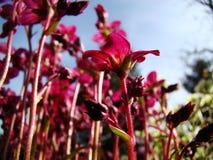 Grandir comme fleur Photo stock