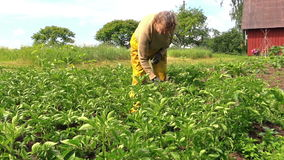 Grandma examine potato harvest branch in country garden stock video footage