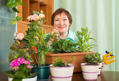 Grandmother botany with flowers at home Stock Photography