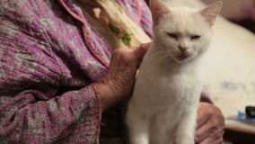 The Grandmother With A Cat On A Sofa stock video
