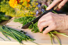 Grandmother chopping fresh parsley Stock Photos